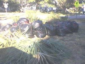 "This is only a portion of the debris cleared away by the men from church that day. The ""bushes"" behind the trash bags are piled limbs hauled out to the street. (Sorry for the poor lighting!)"
