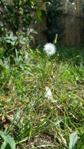 I was as fragile as dandelion fluff.