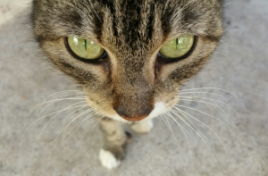 Maybe it's grief, not the cat, that's got your mourning friend's tongue. (Photo by Teresa TL Bruce, TealAshes.com)