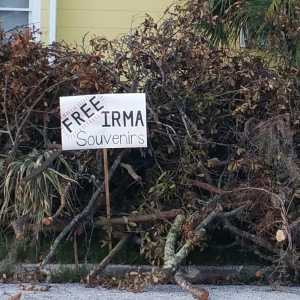 Free Irma Souvenirs sign, branches, hurricane Irma, TealAshes.com